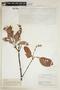 Byrsonima crassifolia (L.) Kunth, BRITISH GUIANA [Guyana], F
