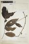 Diplopterys cabrerana (Cuatrec.) B. Gates, VENEZUELA, F