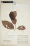 Diplopterys cabrerana (Cuatrec.) B. Gates, COLOMBIA, F