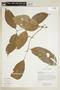Diplopterys cabrerana (Cuatrec.) B. Gates, ECUADOR, F