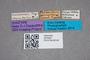 2819402 Philonthus peruvianus ST labels IN