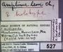 527 Amplinus leon HT IN labels