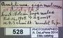 528 Amplinus tajumulco HT IN labels