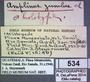 534 Amplinus zuniulus HT IN labels