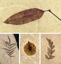 Various FBM species