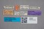 2819406 Philonthus pelzelmayeri ST labels IN