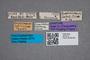 2819414 Philonthus doudecimpunctatus ST labels IN