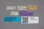 2819423 Atheta amicula attarum ST labels IN