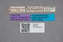 2819424 Philonthus donckieri ST labels IN