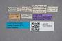 2819425 Belonuchus bipunctatus ST labels IN