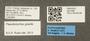 2821899 Pseudomyrmex gracilis L IN
