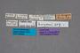 54094 Omalium algidum burgeoni ST labels IN