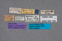 54184 Omalium gridellii ST labels IN