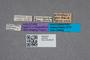 2819433 Heterothops grandiceps HT labels IN