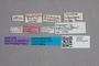 2819434 Conurus maculosus ST labels IN