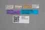 2819435 Coproporus secretus ST labels IN