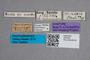 2819436 Coproporus splendens ST labels IN