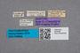 2819446 Conosoma bilineatum ST labels IN