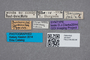 2819447 Conosoma burgeoni ST labels IN