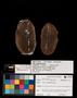 PP 25376 A+B [HS, M] Plantae, Moscovian / Desmoinesian, Francis Creek Shale Member, United States of America, Illinois, Mazon Creek Region