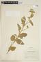 Sida cordifolia L., COLOMBIA, F