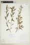 Sida rhombifolia L., GUYANA, F