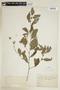 Sida rhombifolia L., COLOMBIA, F