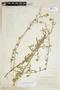 Sida salviifolia C. Presl, COLOMBIA, F