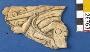 26763: bone basrelief fragment