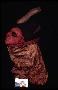 210115: wood, paint, cloth mask