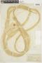 Urena lobata image