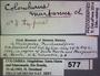 577 Colomborus martanus HT IN labels