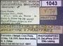 1043 Cyclopsodesmus geniculatus HT IN labels