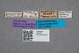 2819451 Heterothops quadriceps HT labels IN