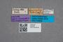 2819455 Quedius decoratus ST labels IN