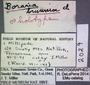2029 Boraria brunnior HT IN labels