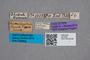 2819459 Quedius himalayicus HT labels IN