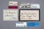 127085 Oxytelus alternans ST labels IN