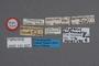 131007 Oxytelus antennarius HT labels IN