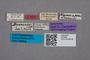 2819461 Myrmecopora bernhaueri ST labels IN