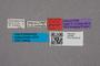 2819463 Gyrophaena gracilis HT labels IN