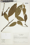 Casearia pitumba Sleumer, COLOMBIA, F