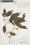 Casearia pitumba Sleumer, BRITISH GUIANA [Guyana], F