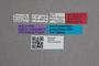 2819470 Mastopsenius australis HT labels IN