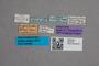 2819476 Leptacinus hypsibathus ST labels IN
