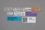 2819494 Quedius ripicola ST labels IN