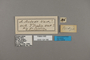 124166 Actinote thalia anteas labels IN