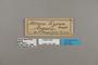 124168 Acraea lycoa labels IN
