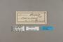 124179 Acraea vestalis labels IN