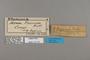 124181 Acraea formosa labels IN